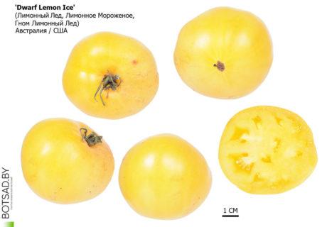 Томат сорт 'Dwarf Lemon Ice' (Лимонный Лед)