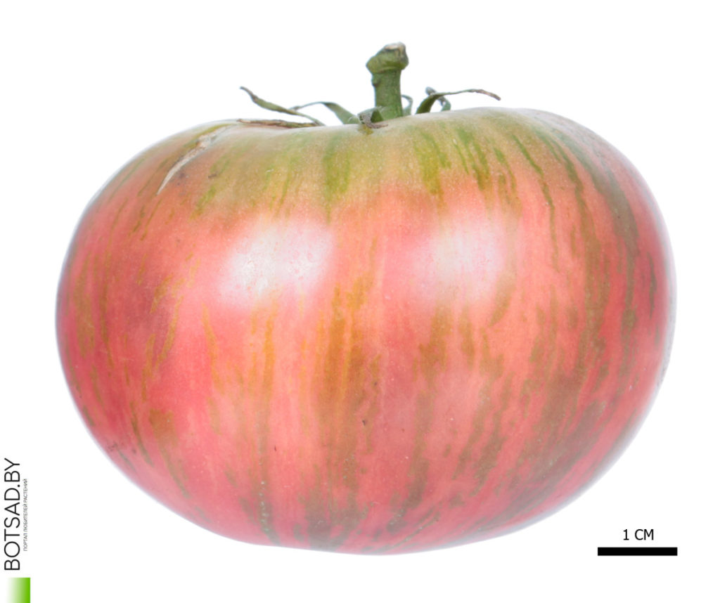 Томат сорт 'Pink Zebra' (Розовая Зебра)