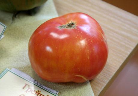 Томат сорт 'Грейпфрут' (Grapefruit)