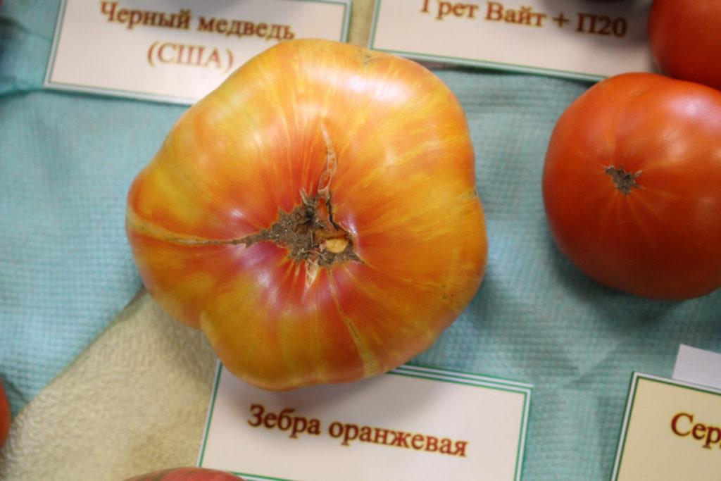 Томат сорт Оранжевая Зебра (Zebra Orange)
