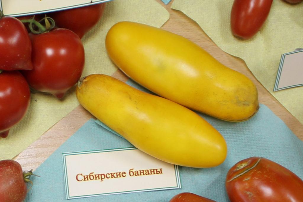 Томат сорт Сибирские Бананы
