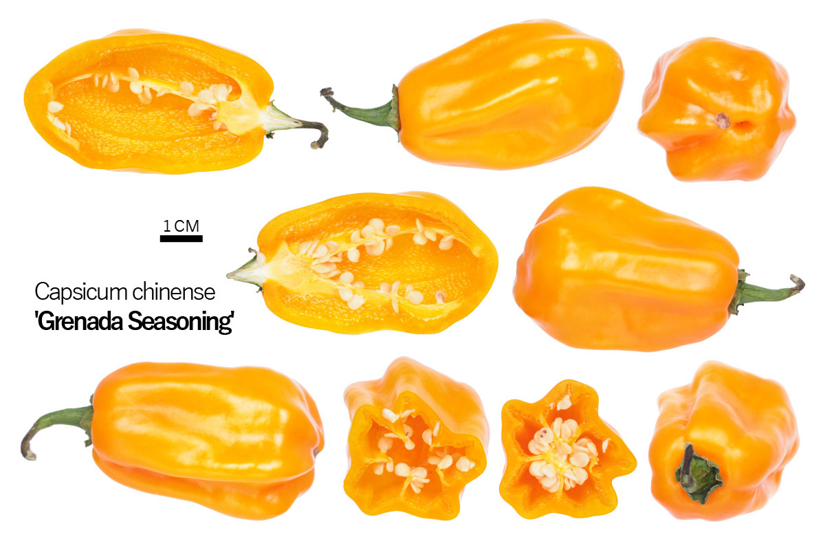 Перец 'Grenada Seasoning'