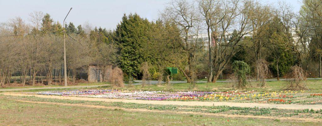 Коллекция гиацинтов Центрального ботанического сада НАН Беларуси