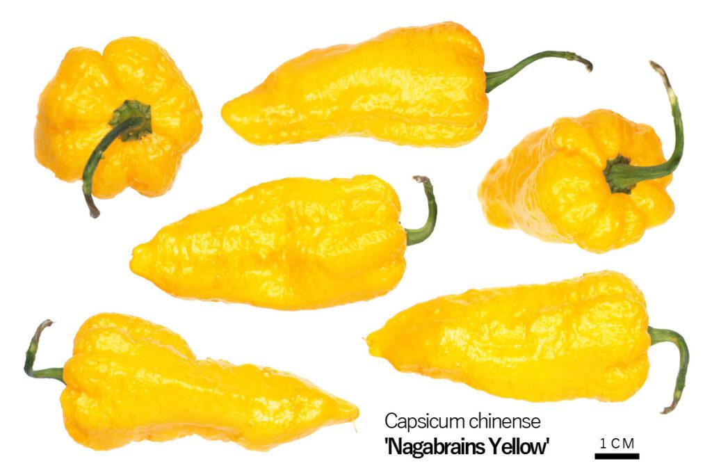 Перец 'Nagabrains Yellow'