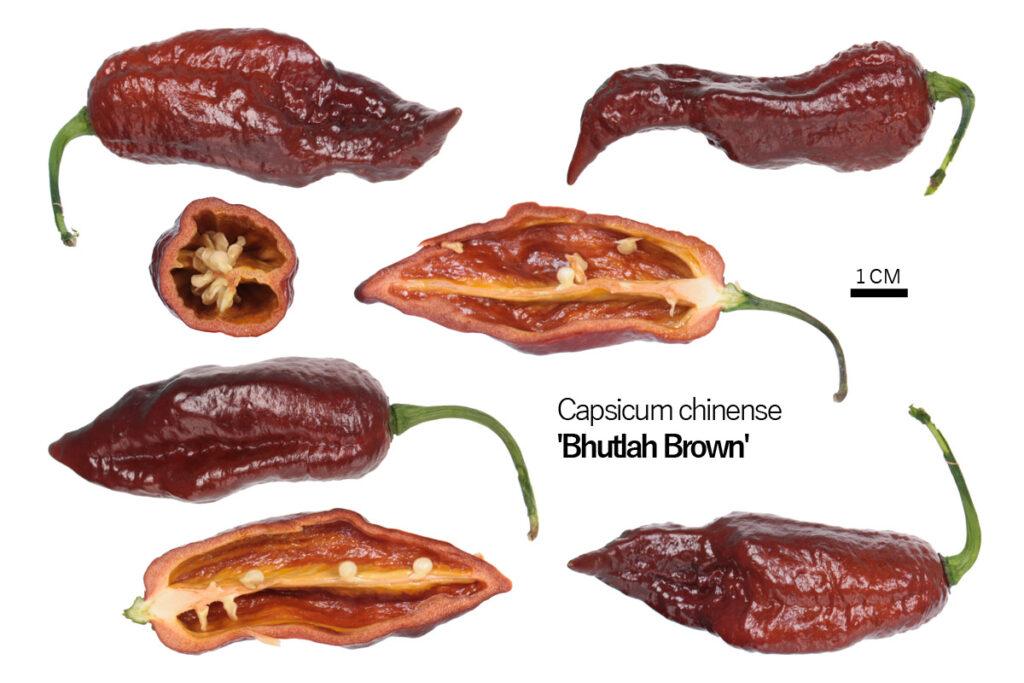 Перец 'Brown Bhutlah'