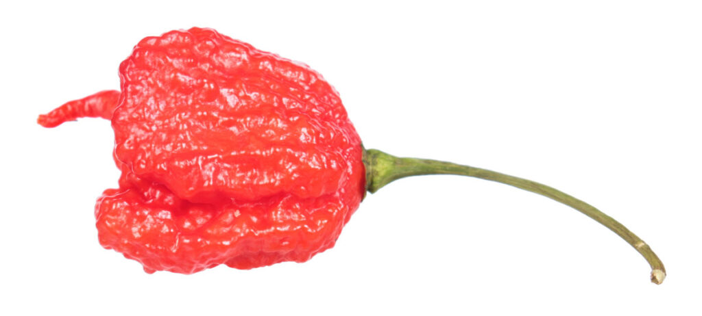 Перец 'Carolina Reaper' (Каролинский Жнец)