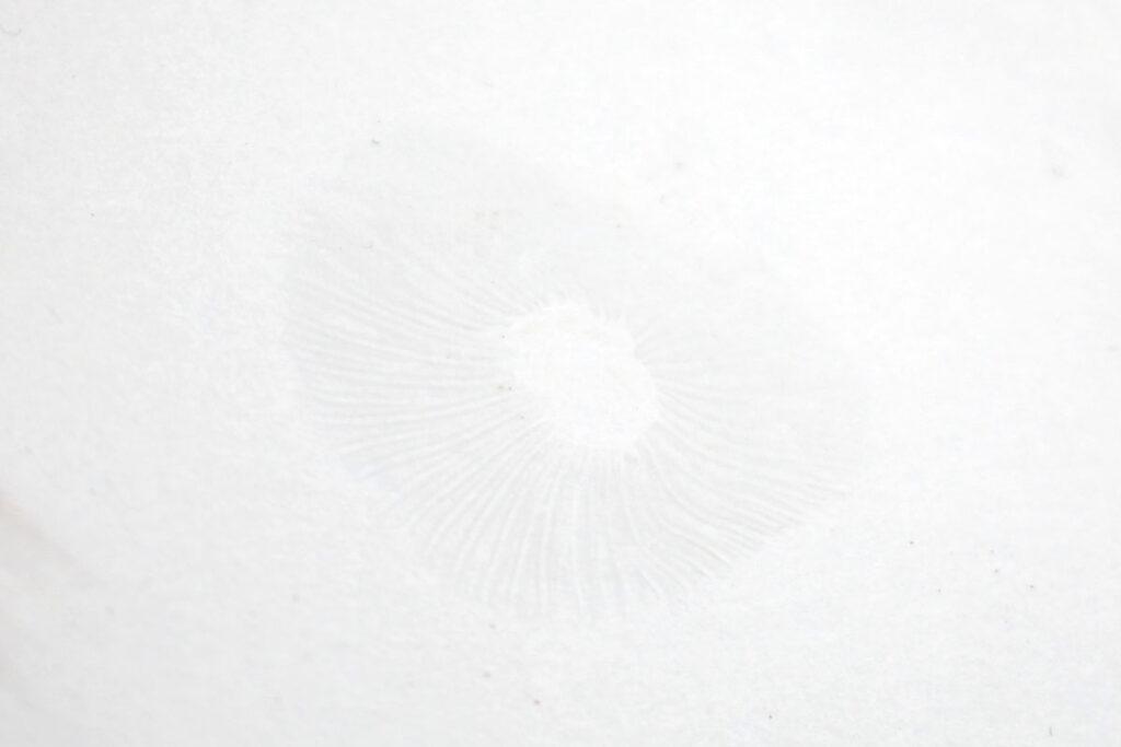 Гигрофор пятнистый (Hygrophorus pustulatus). Споровый отпечаток.