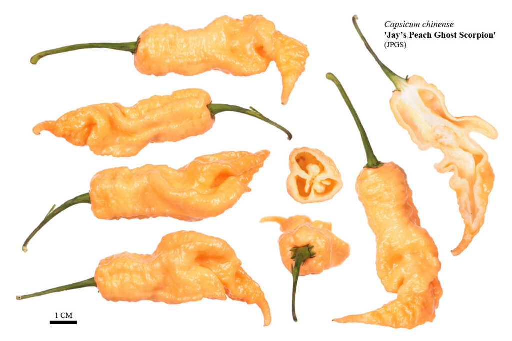 Перец 'Jay's Peach Ghost Scorpion' (JPGS)