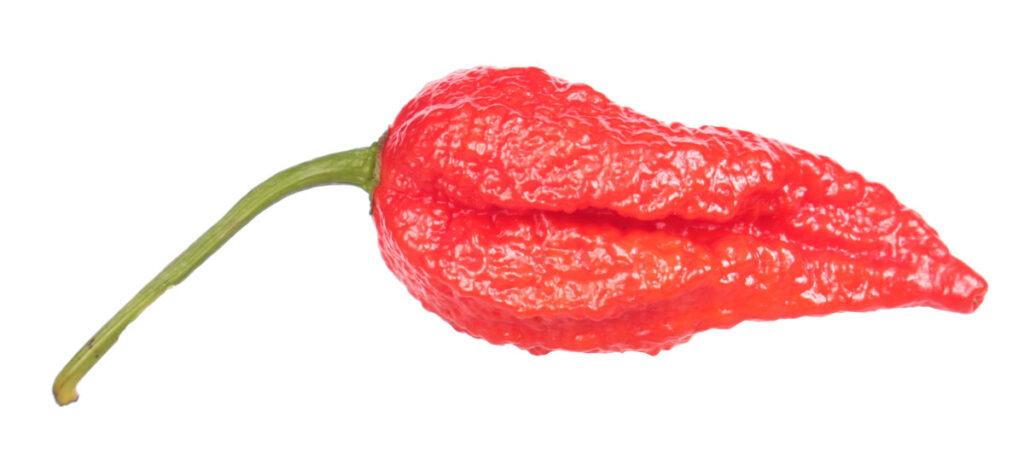 Перец 'Lava Scorpion'