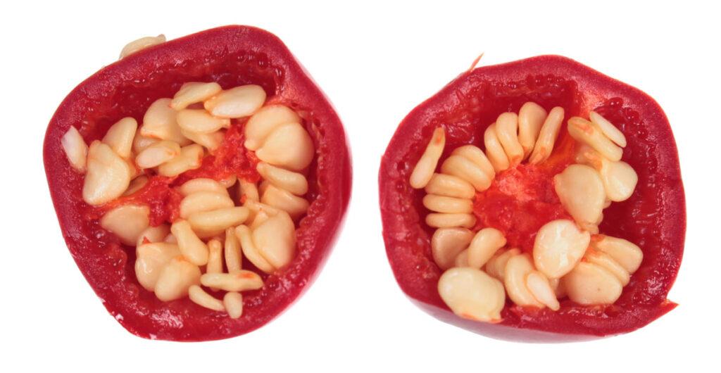 Перец 'Red Cherry'