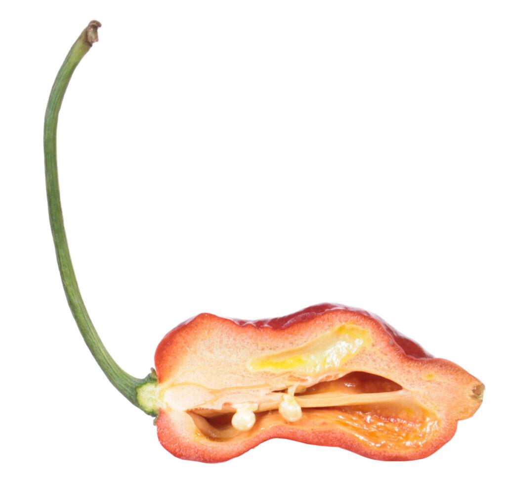 Перец 'Bhutlah Caramel'