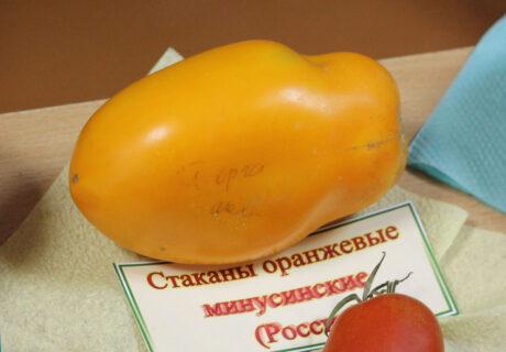 Томат 'Стаканы оранжевые минусинские'