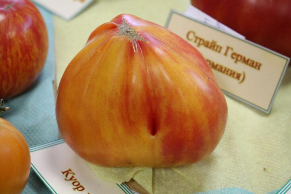 Томат 'Cœur de Zèbre' (Сердце абрикосовой зебры)
