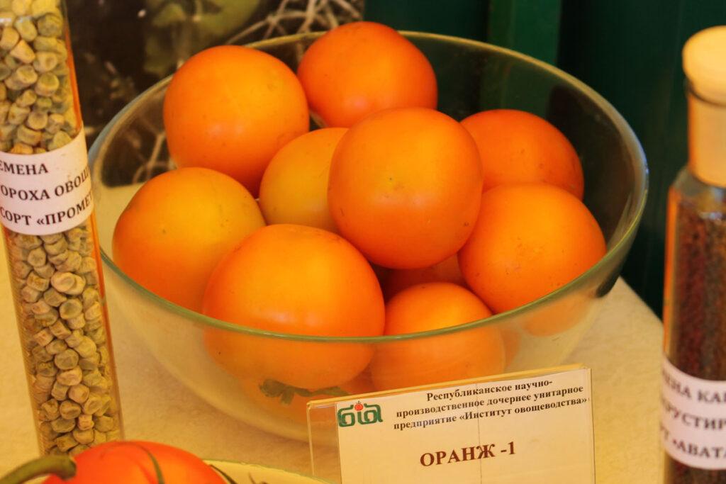 Томат 'Оранж 1'