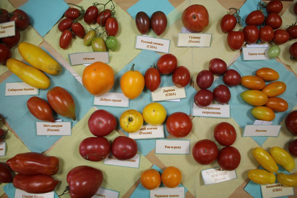 Томат 'Доброе сердце' среди других сортов томатов на выставке.