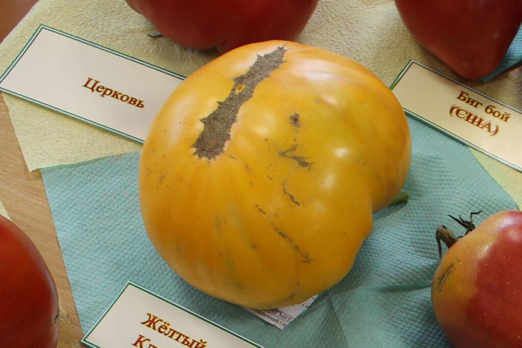 Томат 'Claude Brown's Yellow Giant' (Желтый гигант Клода Брауна)